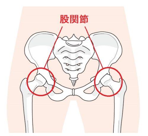 股関節の画